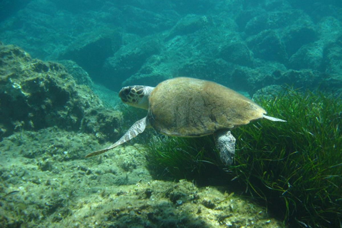 Turtle diving in Paphos