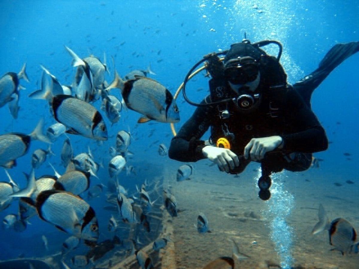 Beautiful Zenobia Diving
