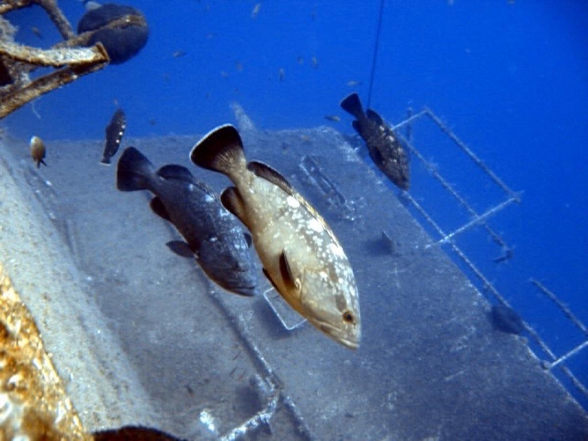 Zenobia Marine Life