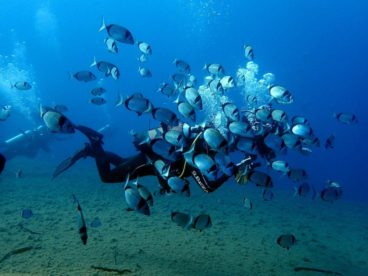 Open Water diving course Cyprus