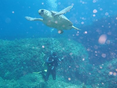 diver with turtle off paphos