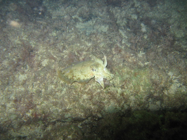 cyprus night dive