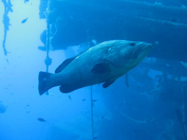 zenobia wreck diving