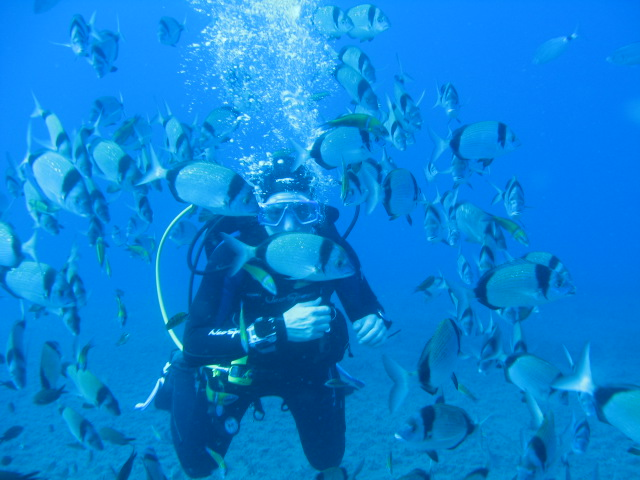 Sea bream shoaling around a diver