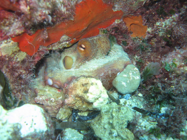 Octopus boat diving off Paphos
