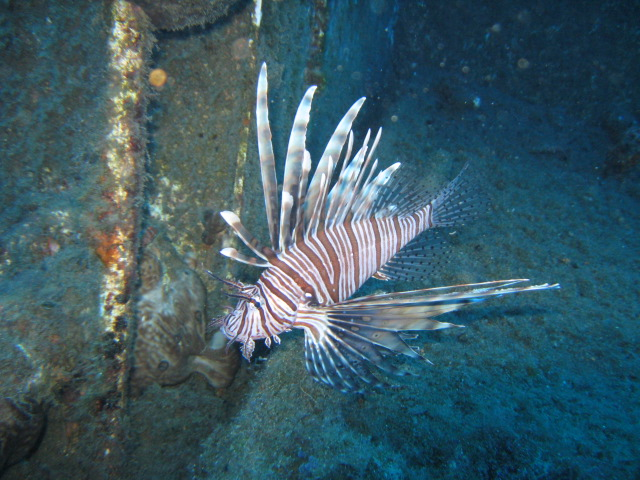 limassol wrecks lionfish
